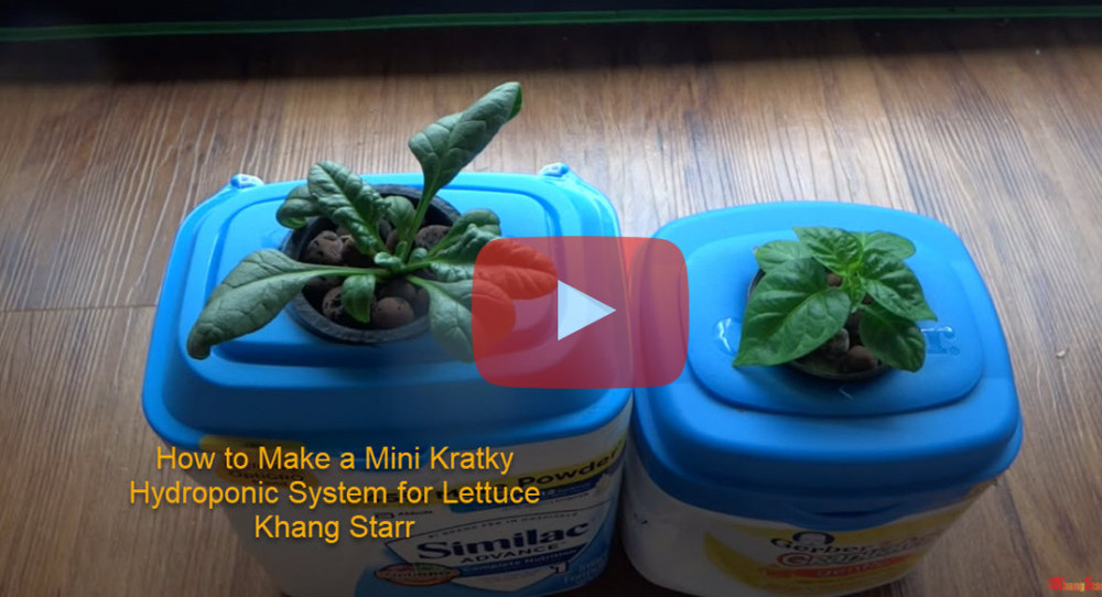 how-to-make-a-mini-kratky-hydroponic-system-for-lettuce