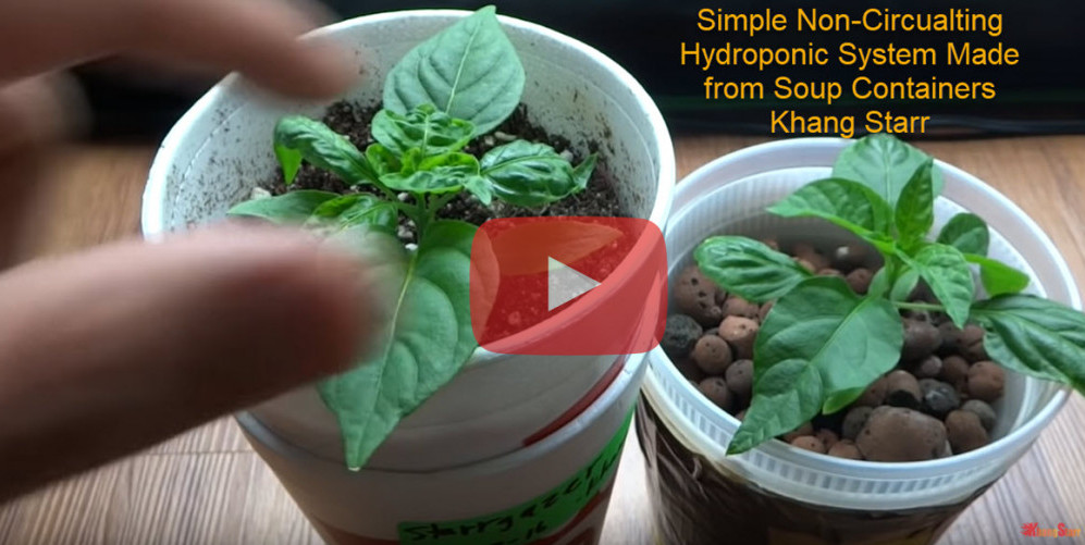 Simple Non-Circulating Hydroponic Systems Made from Soup Containers