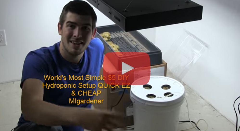 world-s-most-simple-5-diy-hydroponic-setup-quick-ez-cheap