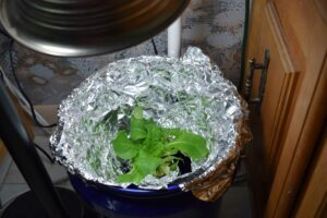 Grow Bucket