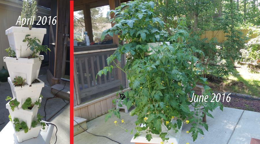 Hydroponic Gardening 2016