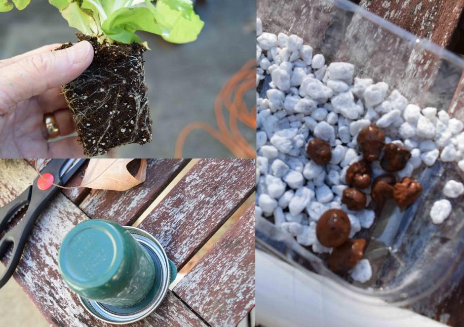 hydroponic-plants-and-medium