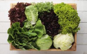 Lettuce Varities