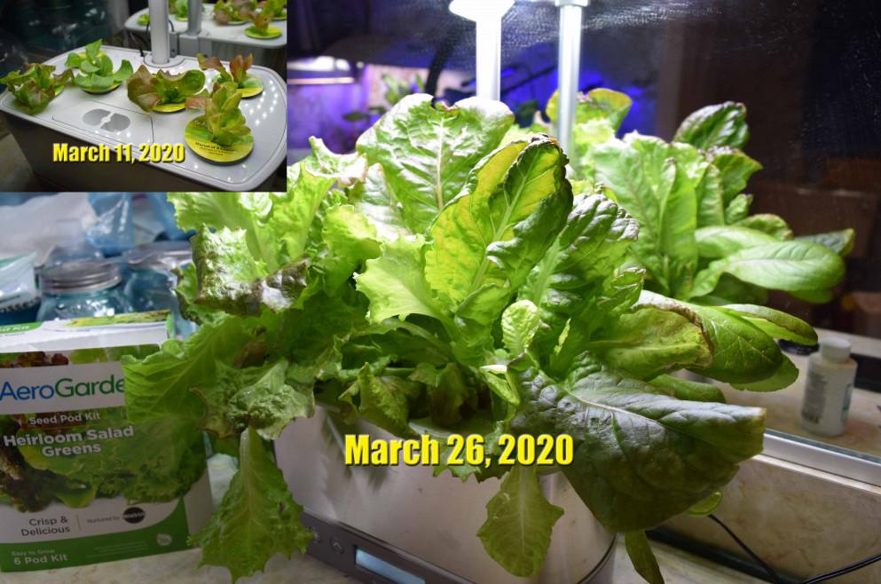 mar-11-mar-26-2020-aerograden