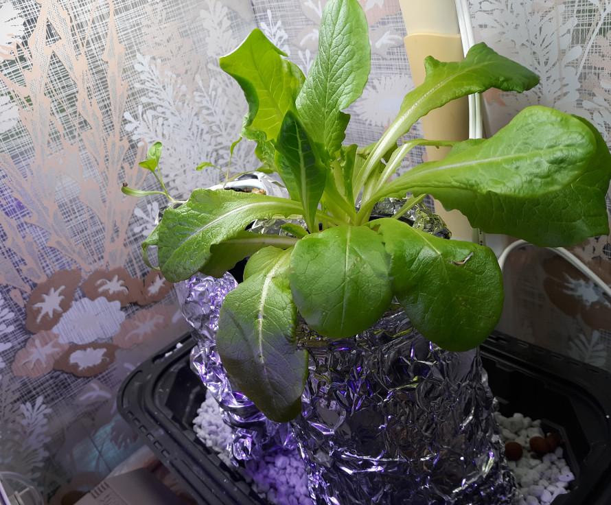 mason-jar-diy-hydroponics