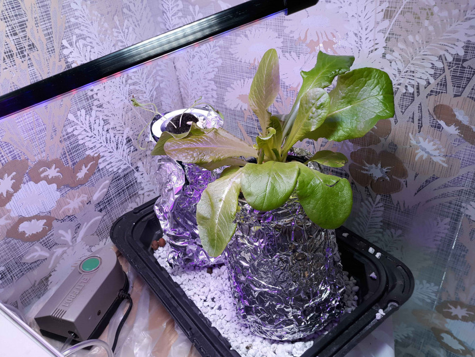 mason-jar-hydroponics