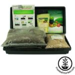 Wheat grass grow kit