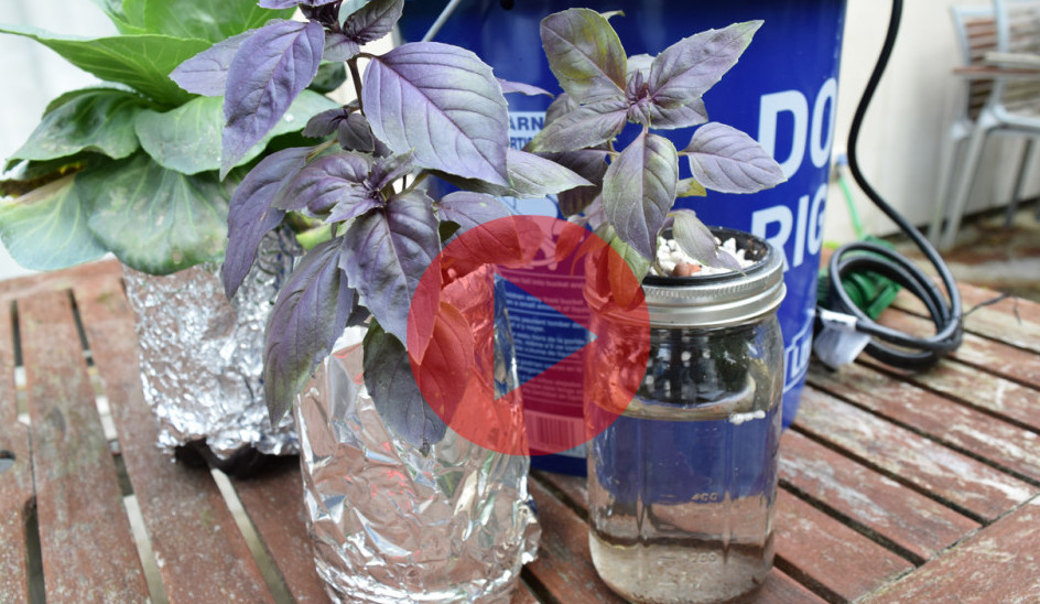 Cheap and Fun Mason Jar Hydroponics